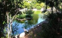 Yoga al parco di Monte Urpinu Cagliari